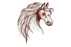 Angry brumby horse sketch icon