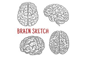 Human brain sketches