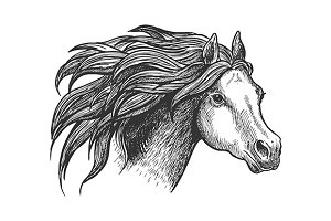 Sketch of vigorous horse