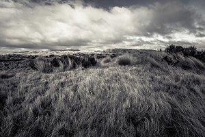 Tussock on Volcanic Plateau, NZ