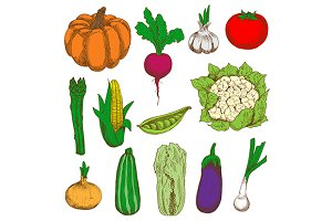 Ripe and fresh vegetable sketches