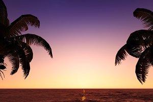 Silhouette of coconuts in the sea