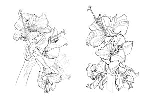 hibiscus flower pencil drawing