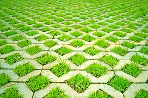 Lawn Grass in concrete table.