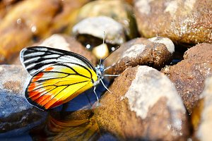 butterfly at the river.