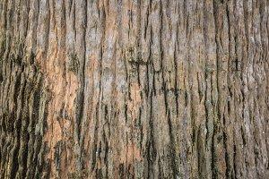 tree bark texture pattern nature