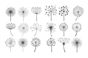 Dandelion collection in linear style