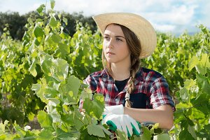 farmer in the vines thinking