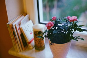 Pink roses on a windowsill