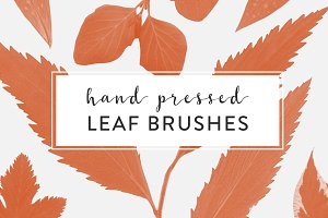 Pressed Leaves Photoshop Brushes