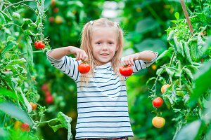 Adorable little girl collecting crop cucumbers and tomatoes in greenhouse