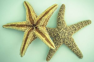 2 Starfish on light blue background