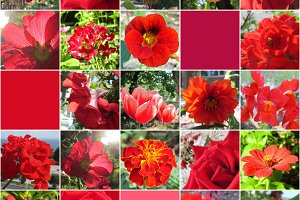 Red flowers collage