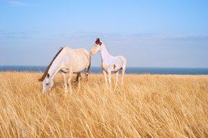 Beautiful horses at seashore