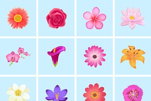 Flower Color Set Design