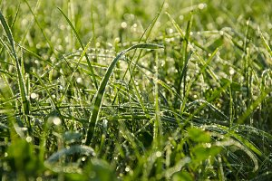 Green Grass with Raindrops