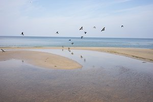 Flock of birds. Baltic sea