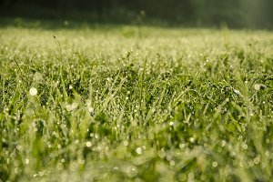 Green Grass with Raindrops and Bokeh