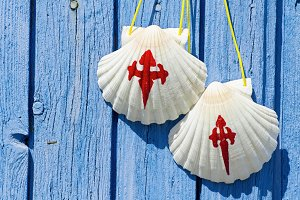 pilgrim scallops on wooden door