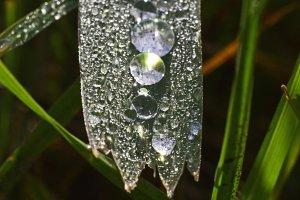 Raindrop Lineup
