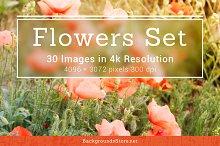 Flowers Images Set