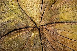 A Cut Log