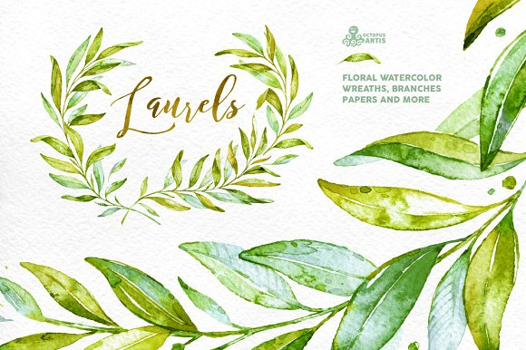 Laurels. Floral collection. - Illustrations