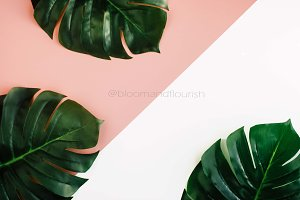 MONSTERA STRIPED TROPICAL STOCK