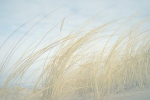 Yellow grass on the beach