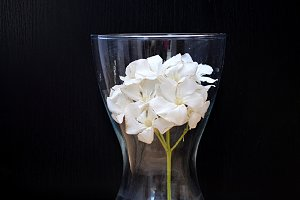 vase with white oleander