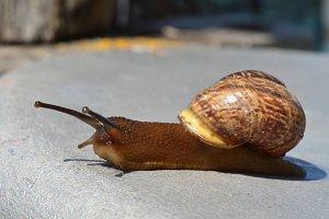 Little snail. Summer sunny day.
