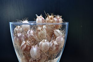 vase with seeds capsules