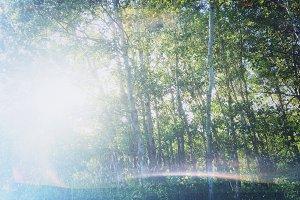 Lo-fi Birch Grove Snapshot 2