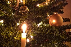 Lo-fi Candle Tree Snapshot