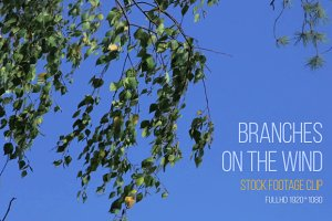 Branches - Video Footage Clip
