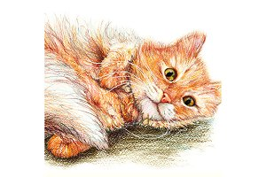 Domestic ginger fluffy cat