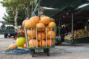 Pumpkins on the market