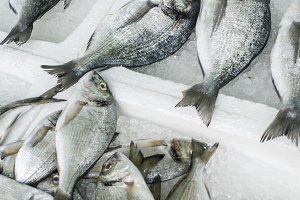Raw sea bream fish on ice