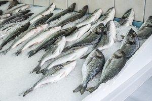 Raw sea bream and bass fish