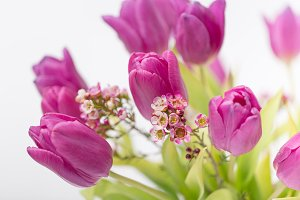 Tulips Bouquet I