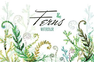 Watercolor Vector Ferns