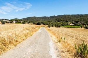 Summer rural road