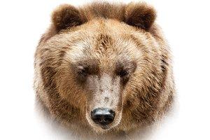 Bear face on white