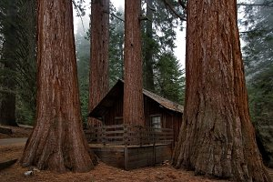Small house in Sequoia Park
