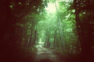 Lo-fi Forest Escape Snapshot