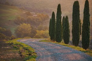 Cypresses and road