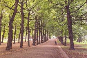 Tree lined boulevard