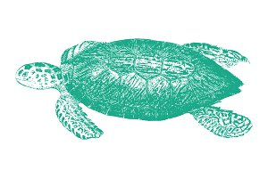 Vector Sea Turtle Illustration