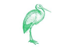 Vector Stork llustration