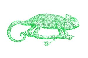 Vector Chameleon Illustration